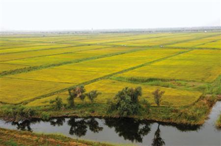 2020年年底全省受污染耕地安全利用率年内将达90%