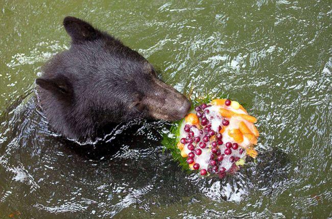 各地动物园纷纷拿出美味的水果冰,招待和人类一样怕热的动物们.